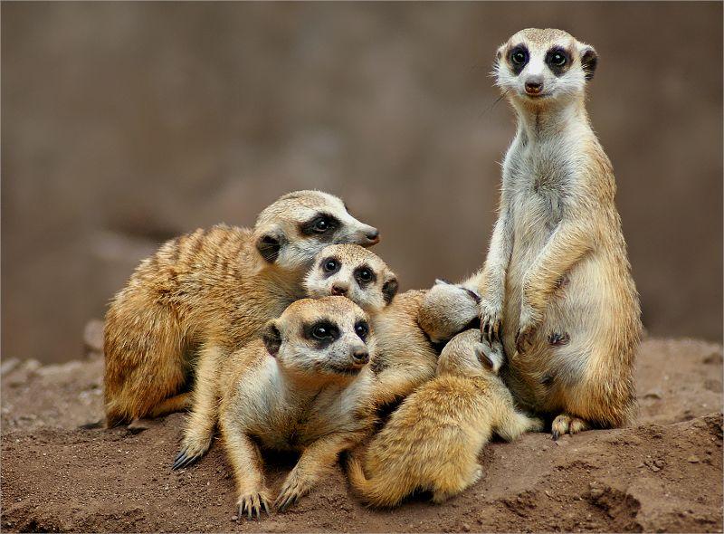 Leon Pelser Mongoose Family