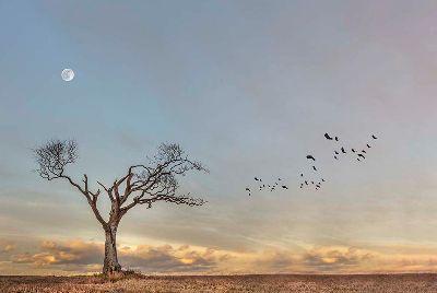Lone Tree, Adair  Sinclair , Ireland