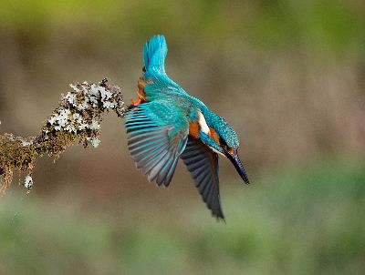Kingfisher Dive, Steward  Duncan , England