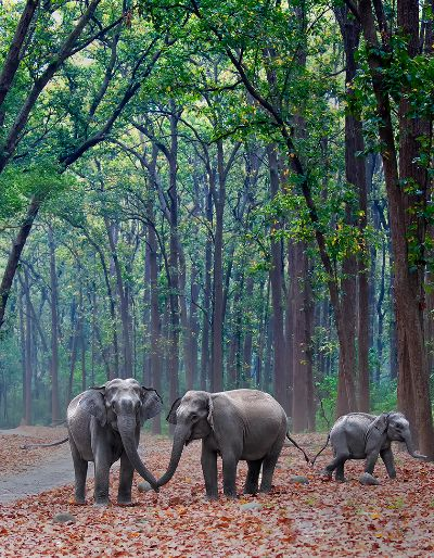 TAIL AND TRUNK STORY, Krishan  Prakhar , India