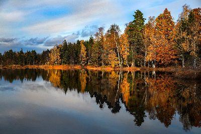 Autumn Tree, Erlandsson  Goran , Sweden