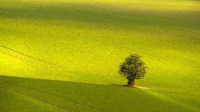 The Lonely One, Ciorba  Cerasela , Romania
