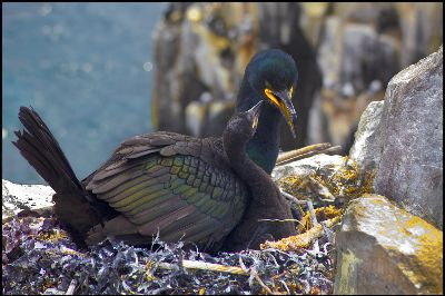 Shag And Chick, Jackson  Paul , England