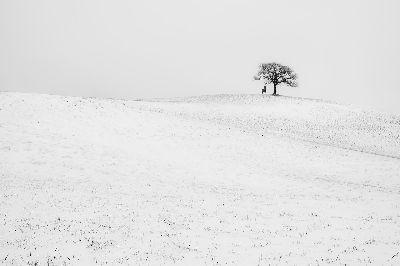 Snow, Sartori  Fabio , Italy