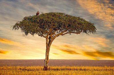 Lonely Tree, Shectman  Leonid , Usa