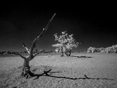 Loonse Dunes, Ramge  Peter , Germany