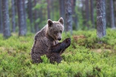 Grizzly Bear 5, Arkhipov  Dmitry , Russian Federation