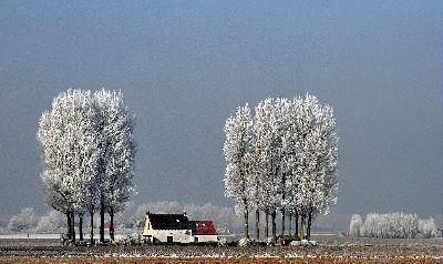 Winterochtend, Lybaert  Daniel , Netherlands