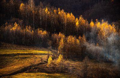 Golden -Tress, Lazar  Constantin , Romania
