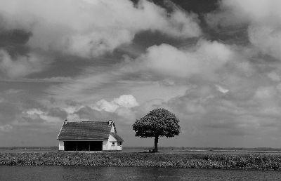 Das Haus Und Der Baum, Schwinges  Klaus , Germany
