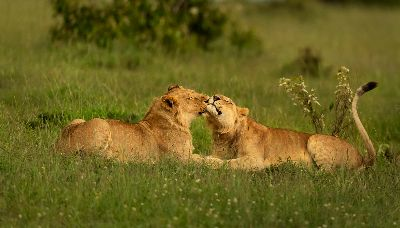 Brotherly Love, Shanbhag  Pramod Govind , India