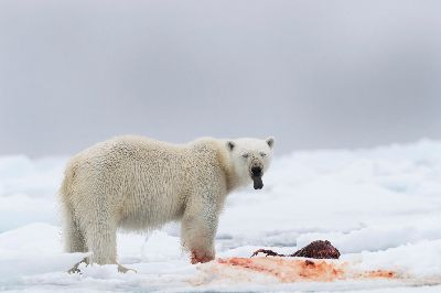 Hungry Bear, Shanbhag  Pramod Govind , India