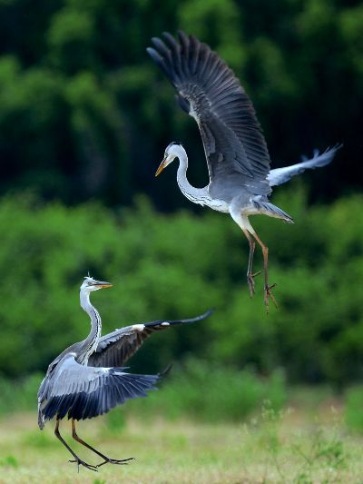 Fight In Air, Monsoon  Prashanth , India