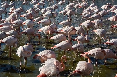 Flamingos 679, Marketaki  Xrysa , Greece