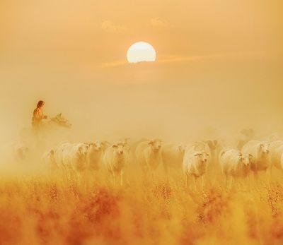 Grassland In Late Autumn, Tong  Jiangchuan , China