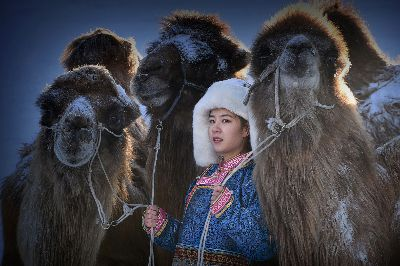 3Camels With Woman, Albrecht  Urs , Switzerland