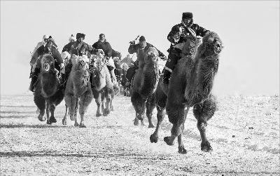 Camel Race 85 BW, Kwan  Phillip , Canada