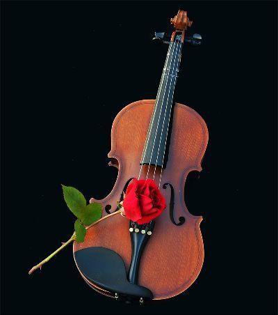 Violin And Rose, Pelser  Sussa , South Africa