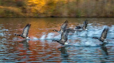 Taking Off, Lam  Nancy Yok Sim , Canada
