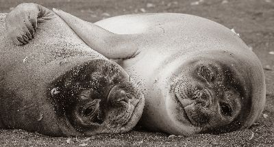 Sea Lion Pups Hugging, Kleindienst  Valerie , Australia
