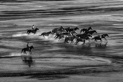 Horse Running 316, Fung  Chau  Yuk , Hong Kong