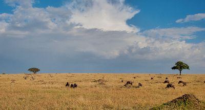 Masai Mara Landscape, Killen  Roy , Australia