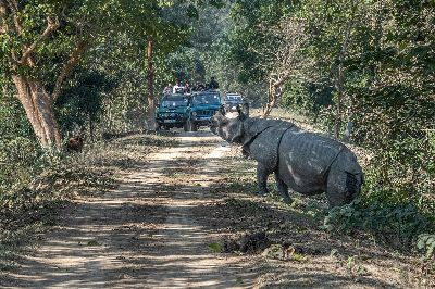 Pobitora Rhino Crossing, Banerjee  Abhijeet Kumar , India