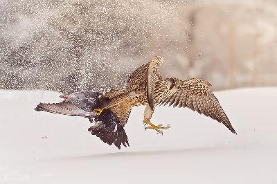 Speedy Hunting, Leung  Cyril Kwok Keung , Hong Kong