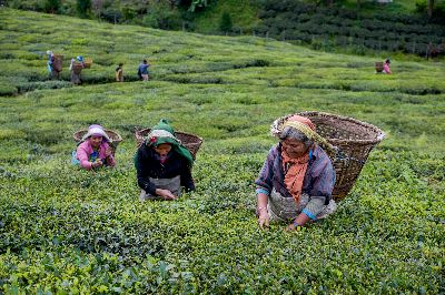 Tea Workers32, Biswas  Rajdeep , India