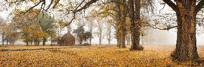 Autumn Gold, Willis  Megan , Australia