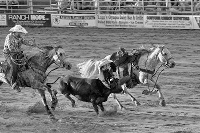 Cowtown Rodeo 03, Meinberg  Volker , Germany