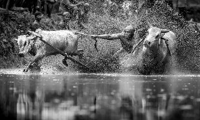 Bull Race2, Tam  Chan Ieong , Macau