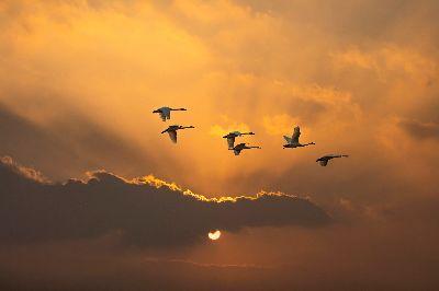 Flying At Sunset, Lee  Wu Tzung , Hong Kong