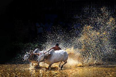 Kalapoottu, Prasad  Jinesh , India