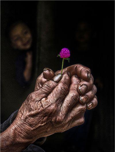 The Flower, Saha  Shuvashis , India