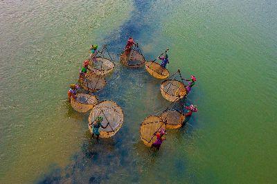 Fisherwomen Of Bengal, Paul  Nikhil , India
