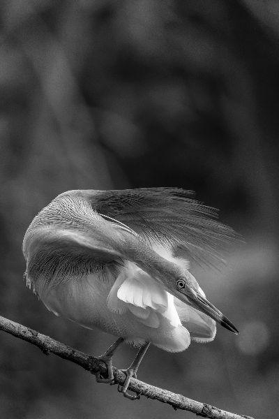 Beauty Of Heron, Paul  Nikhil , India