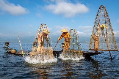 Catch The Fish, Tran  Chinh , Usa