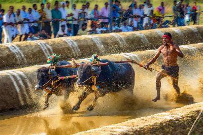 Kambala Sprint 6, Joshi  Raghavendra , India