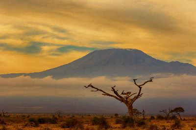 Kilimanjaro Scape, Joshi  Raghavendra , India