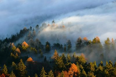 Larches In Mists 8, Bricelj  Bogdan , Slovenia