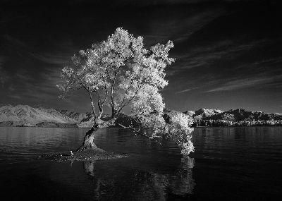 Wanaka Tree, Gahari  Dibyo , Indonesia