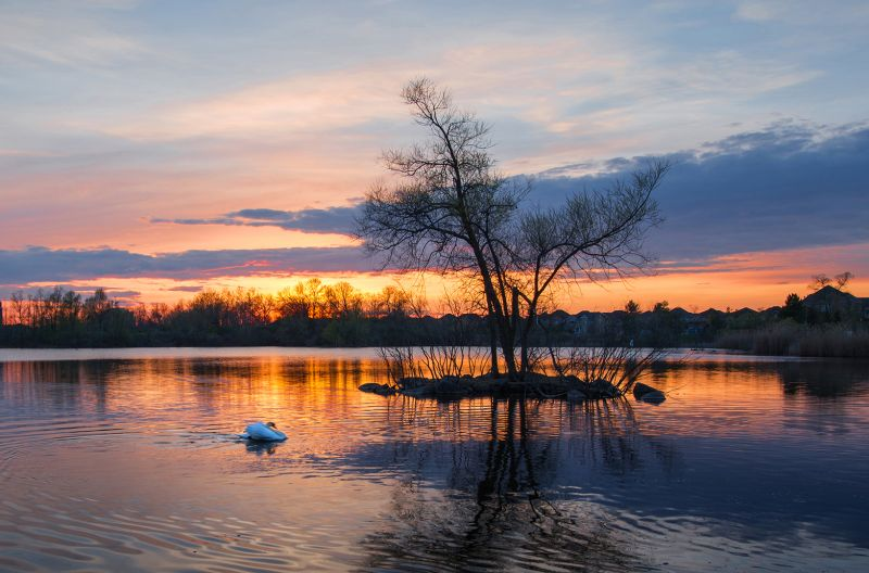 Swan Lake, Luo  Robin , Canada