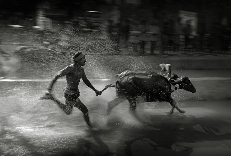 Jockey Of Kambala, Kumar  Ashok , India