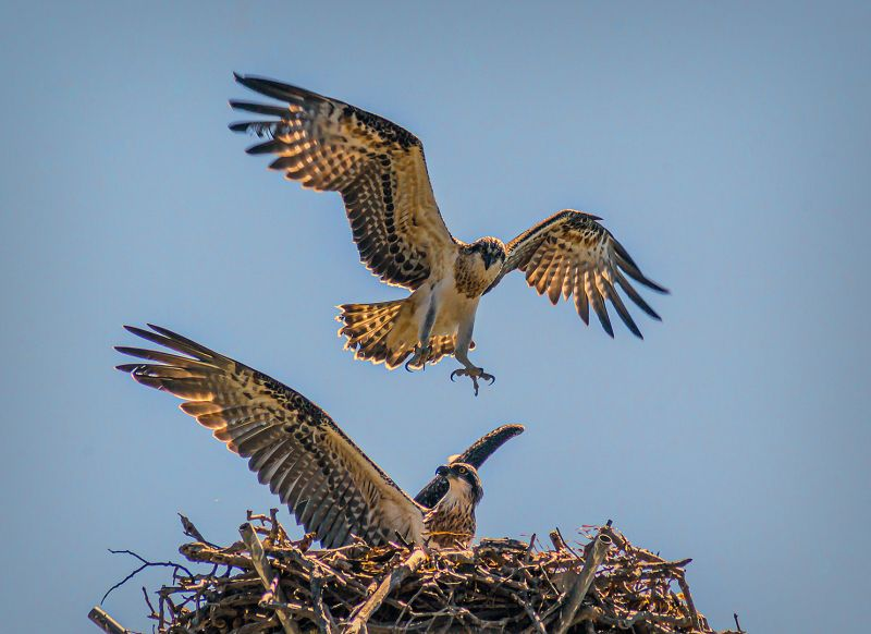 Approaching The Nest, Stoffl  Bernd , Australia