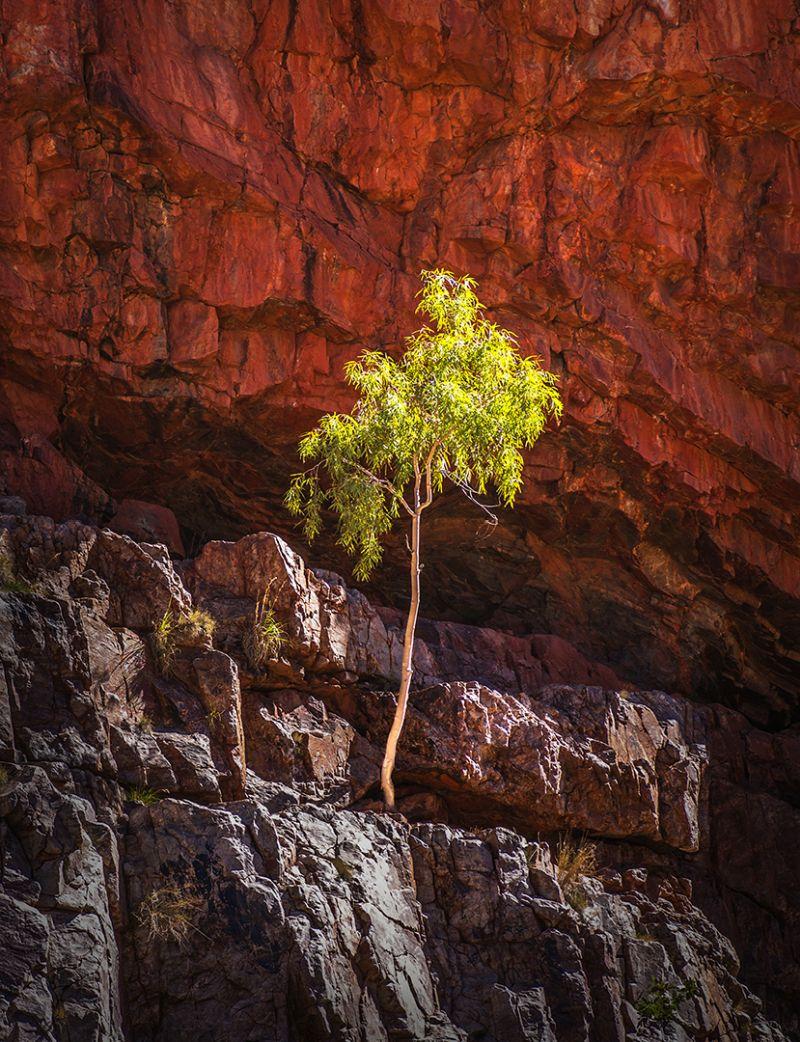 Survival Artist, Stoffl  Bernd , Australia