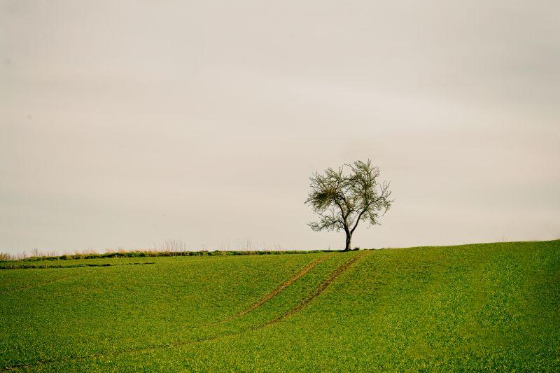 Tree On Top Of Field, Jensen  Rene , Denmark