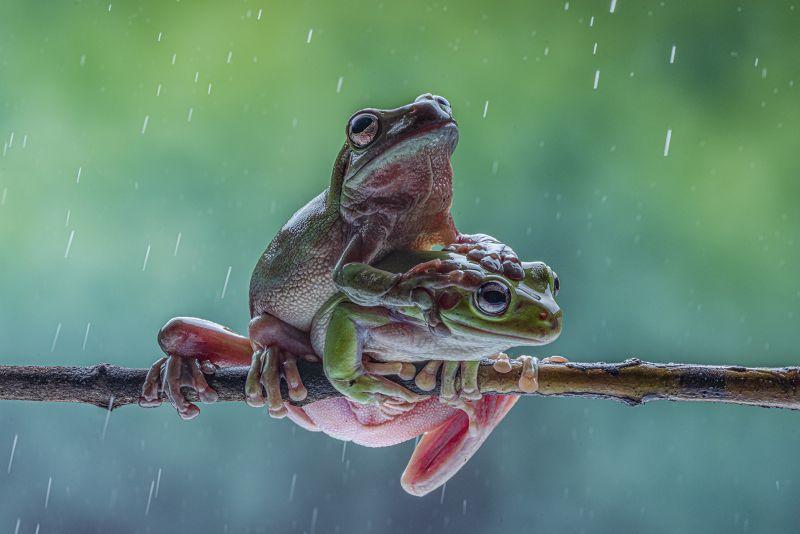 Love In Rain, Bandara  Pandula , Sri Lanka
