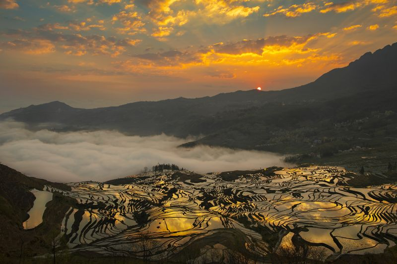 Natural Palette, Wang  Hak Pun William , Hong Kong