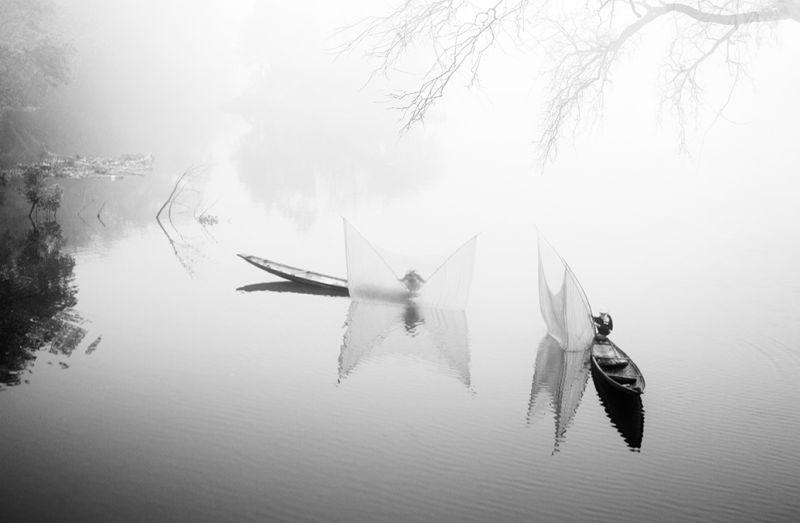Foggy, Nguyen  Minh , Usa